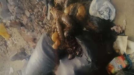 Arrojan vísceras y cabezas de animales en Santa Teresa de Ávila