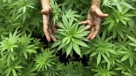Sudáfrica despenaliza el consumo privado de cannabis