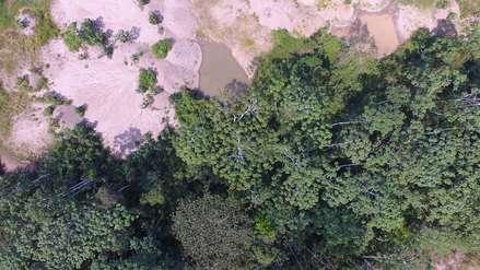 Sembrando bosques donde hubo minería en Madre de Dios