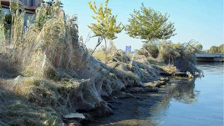 Playa de Grecia apareció cubierta por gigantesca telaraña