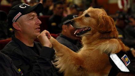 Fiscalía colombiana condecoró a 14 perros que pasaron a jubilación