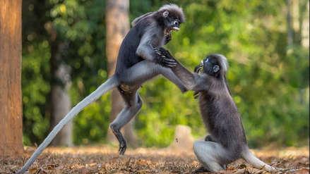 Estas fotografías de animales compiten por ser las más divertidas del 2018