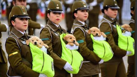 Cachorros se robaron el show durante desfile militar por aniversario de Chile