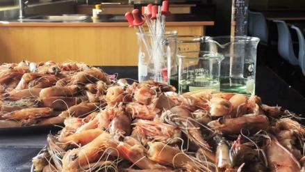 Sydney: Adolescente crea plástico biodegradable con los caparazones de los camarones