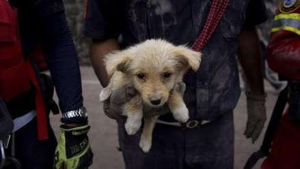 EE.UU.: cachorros enfermaron a más de 100 personas con una infección resistente