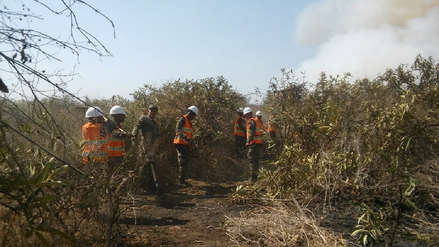 Incendio en Santuario Histórico Bosque de Pómac daña más de 100 hectáreas