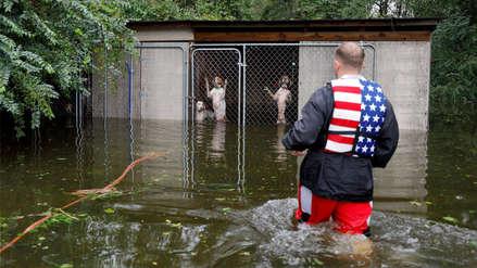 La historia de los perros abandonados en una zona afectada por el huracán Florence