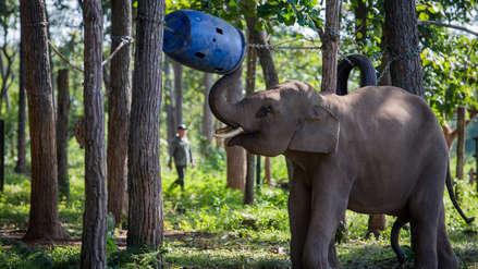Conoce el centro de conservación de elefantes rescatados de la caza furtiva en Vietnam
