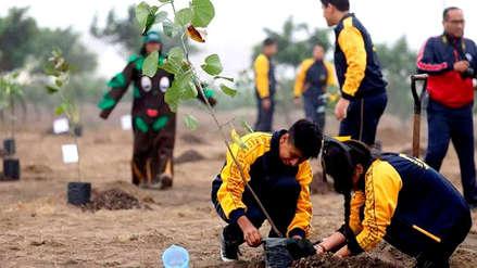 La Municipalidad de Lima amplió con más de 7,000 árboles un vivero en Ancón
