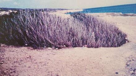 Un árbol de higo en tierra seca y su relación con el hallazgo de tres personas desaparecidas