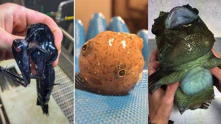 Las extrañas especies capturadas por un pescador ruso en las profundidades marinas