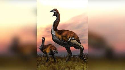 Así era el pájaro elefante: la gigantesca ave que pesaba más que un dinosaurio