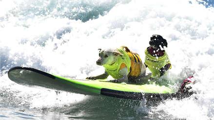 Las postales que dejó la competencia internacional de perros surfistas en California