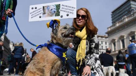 Fotos | Cientos de perros ladran en Londres contra el Brexit