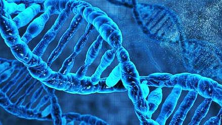 Científicos identifican un gen responsable de la disfunción eréctil
