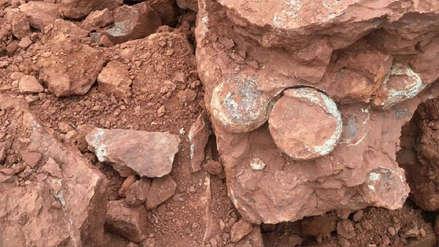 El insólito caso de obreros que descubrieron una piedra que resultó ser un nido de huevos de dinosaurio