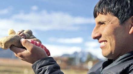 Agricultor cusqueño gana premios Summum por mantener vigente más de 300 variedades de papa