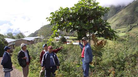 La quina, el árbol del escudo del Perú que lucha por sobrevivir