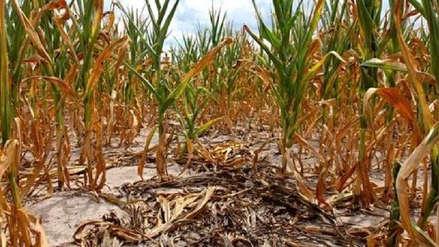 Más de 600 agricultores de Santo Domingo afectados por falta de agua