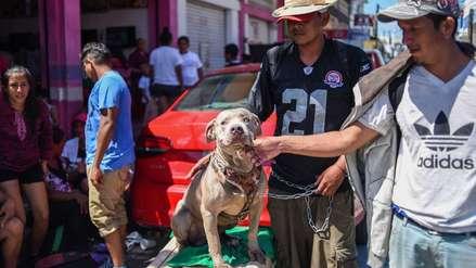 'Bolillo': El perro que viaja con la caravana de migrantes latinos que se dirige a EE.UU.
