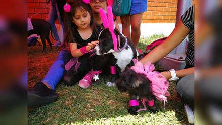 """Fomentan protección animal con concurso de """"perrohalloween"""" en Trujillo"""