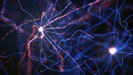 El deporte ayuda a crear nuevas neuronas en el área cerebral del hipocampo