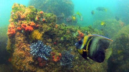 El largo camino para declarar la Reserva Nacional Mar Tropical de Grau