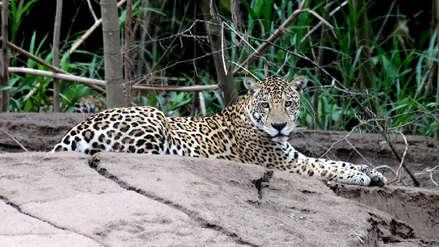 Latinoamérica es la región que más animales ha perdido en medio siglo