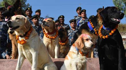 Tihar: la peculiar festividad donde los perros son adorados con manjares y son adoptados por un día