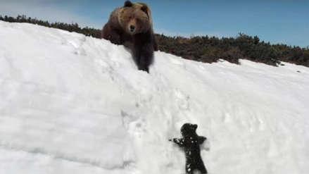 La historia de un oso bebé que lucha para no caer al precipicio