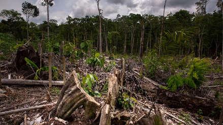 Perú perdió dos millones de hectáreas de bosques primarios en dos décadas
