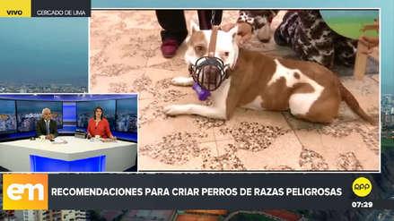 Minsa recomienda evaluación psicológica para dueños de perros de raza peligrosa