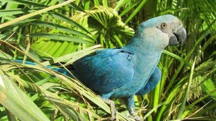 Extinciones: ocho especies de aves habrían desaparecido en las últimas décadas