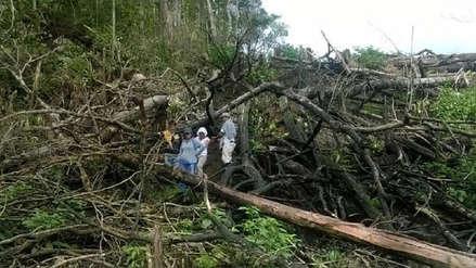 La Amazonía peruana perdió 31,500 hectáreas por cultivos de palma aceitera