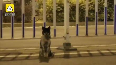 Perro conmueve a China tras llevar más de 80 días en la misma carretera en la que murió su dueña