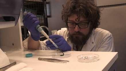 'Proyecto Hulk': Científicos chilenos crean una piel que genera oxígeno y que regenera tejidos