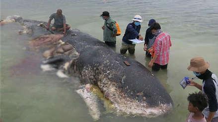 Fotos | Una ballena fue hallada muerta con más de 1,000 objetos de plástico en su estómago