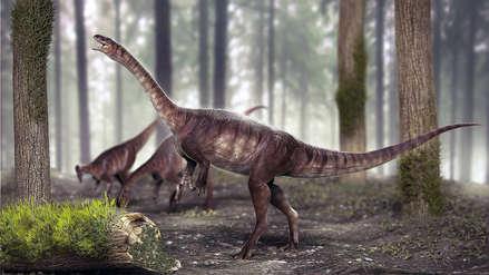 Fotos | Descubren en Brasil el dinosaurio de cuello largo más antiguo del mundo