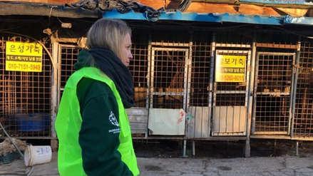 Corea del Sur cierra su mayor matadero de perros