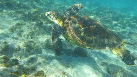 Chile: el misterioso origen de las tortugas de Rapa Nui