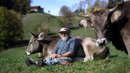 ¿Vacas con cuernos o sin cuernos? Los suizos rechazaron propuesta en referéndum