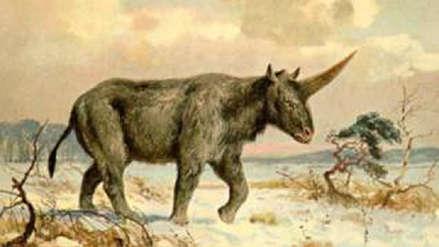 El unicornio de Siberia: científicos revelan el motivo de la extinción de esta antigua especie
