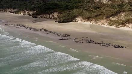 Unas 145 ballenas mueren tras quedarse varadas en la costa de Nueva Zelanda [FOTOS y VIDEO]