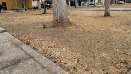 Treinta parques de Trujillo lucen secos y abandonados por falta de riego