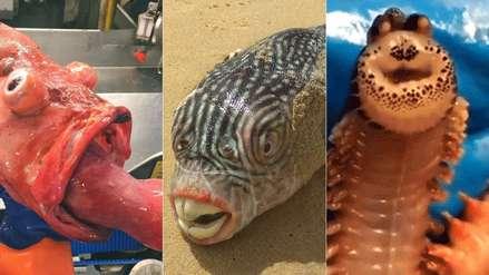 Gusanos sonrientes y peces con 'dientes humanos': las extrañas criaturas marinas halladas por un fotógrafo ruso