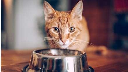 Los dueños que obligan a sus gatos a ser veganos podrían ser sancionados
