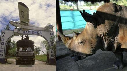 Muere rinoceronte blanco en antigua hacienda de Pablo Escobar en Colombia