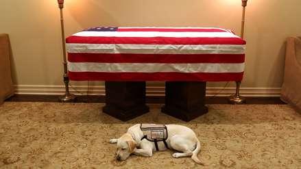 La emotiva foto de Sully, el perro del expresidente George H.W. Bush resguardando su ataúd
