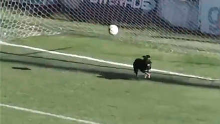 La atajada del año: un perro se metió en la cancha y evitó un gol en la línea del arco en Argentina