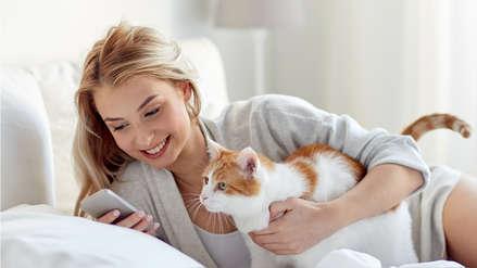 Científicos de Hungría afirman que gatos pueden interpretar correctamente la mirada humana